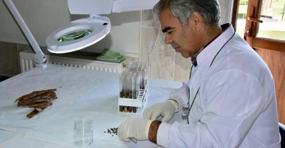 Sinop'ta Ormana 20 Bin Böcek Salındı