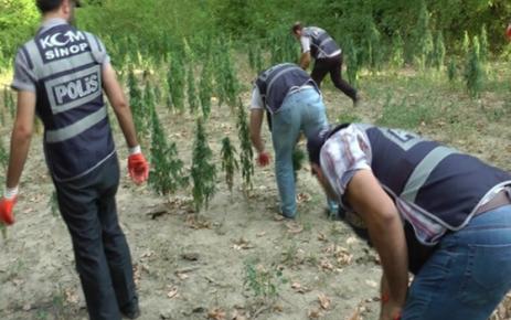 Sinop Polisinden Uyuşturucuya Geçit Yok