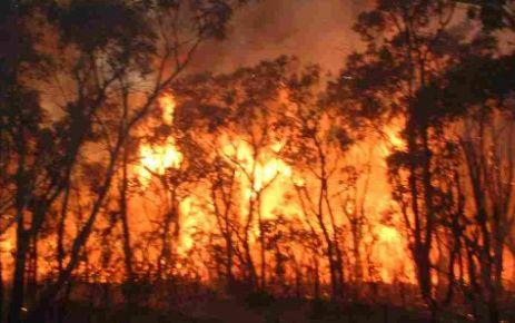 Sorkun'da Orman Yangını