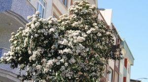 Cemre İle Gelen Bahar