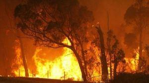 Dikmen'de Büyük Yangın