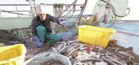 Balıkçılar Şokta