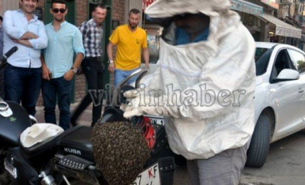 Sinop'ta Arı Şenliği
