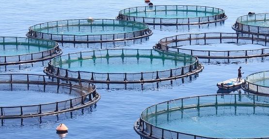 Balık Çiftlikleri Çoğalıyor