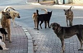 Köyü Köpekler Bastı